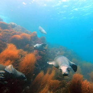 coronado-islands-scuba-diving-san-diego