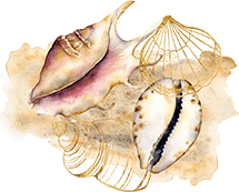 crew-waterhorse-scuba-diving-san-diego-2