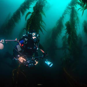 point-loma-kelp-deep-scuba-charters-advanced-dives-waterhorse-san-diego