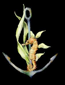 seahorse-anchor-waterhorse-charters